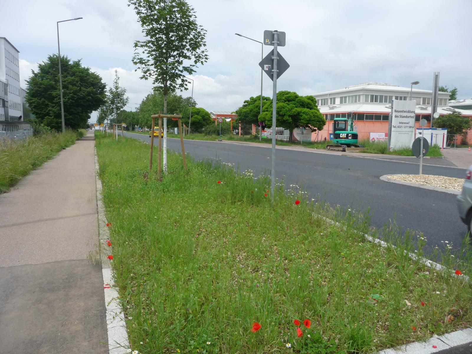 Extensive Verkehrsgrünflächen an der Stuttgarter Straße.  Angelegt: 2015/2016 im Zuge der Straßenausbaumaßnahme. Artenvielfalt: Nektarquelle für Hummeln und Wildbienen