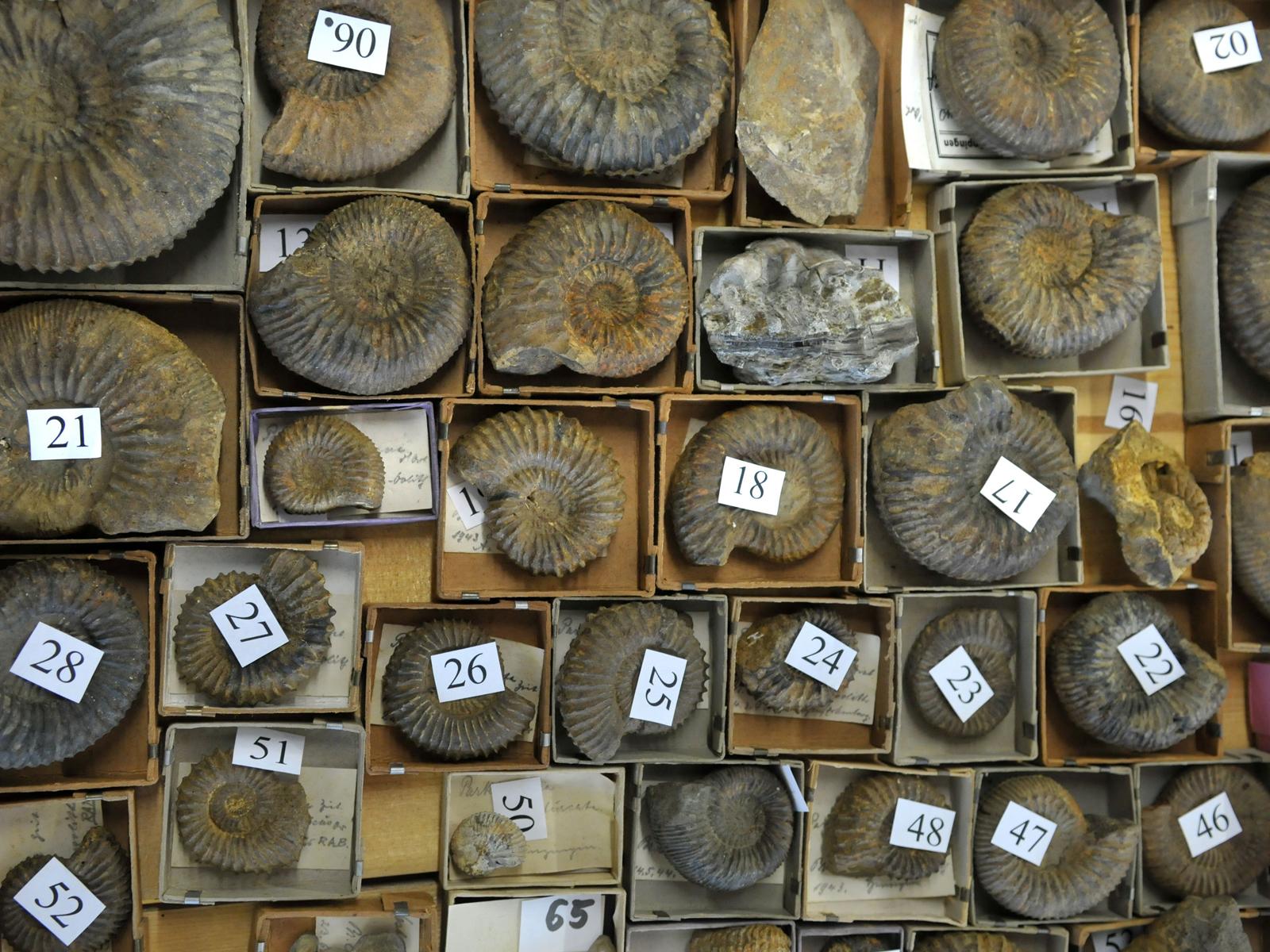 Verschiedene, nummerierte Fossilien