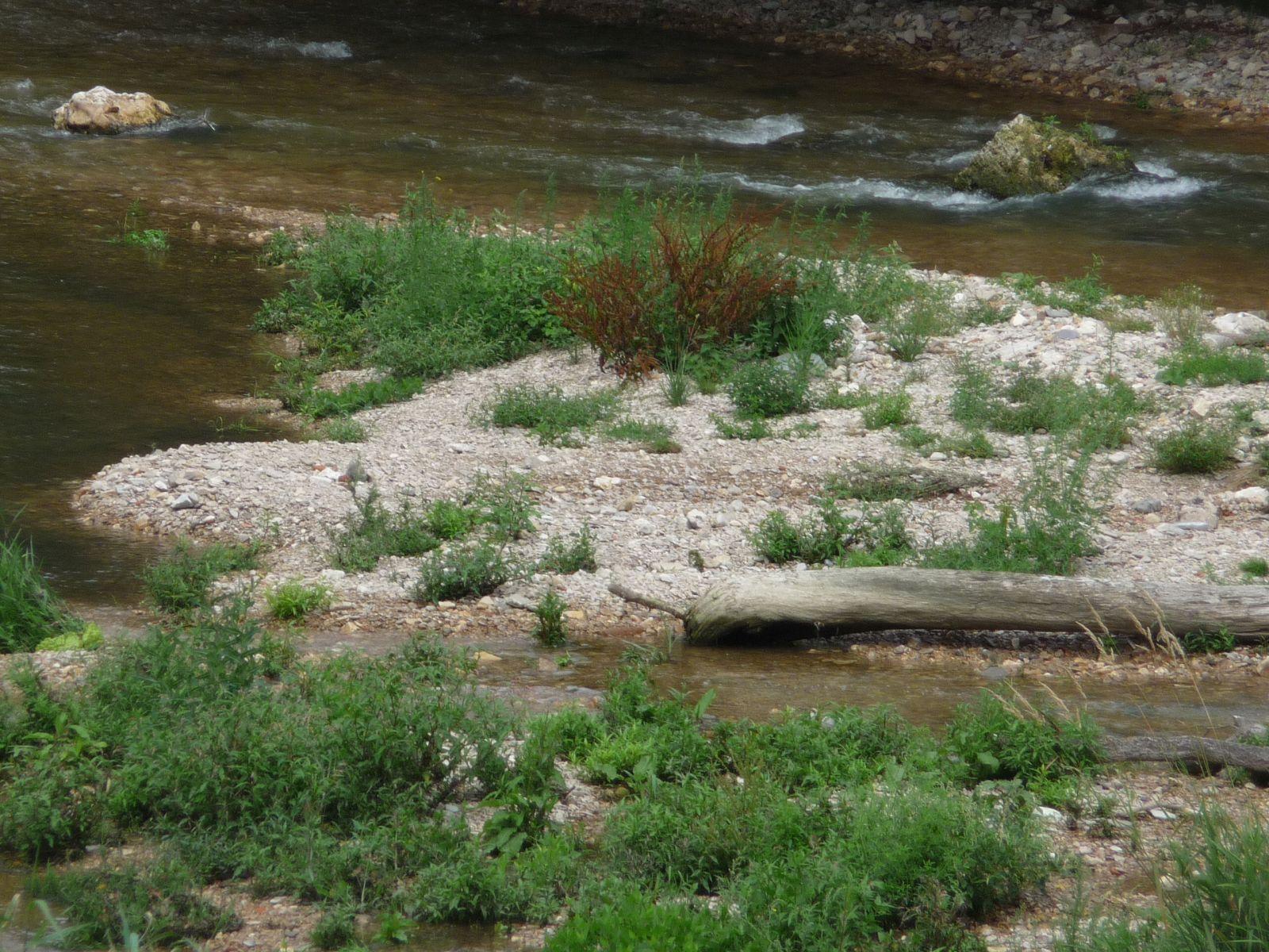 Renaturierter Uferbereich