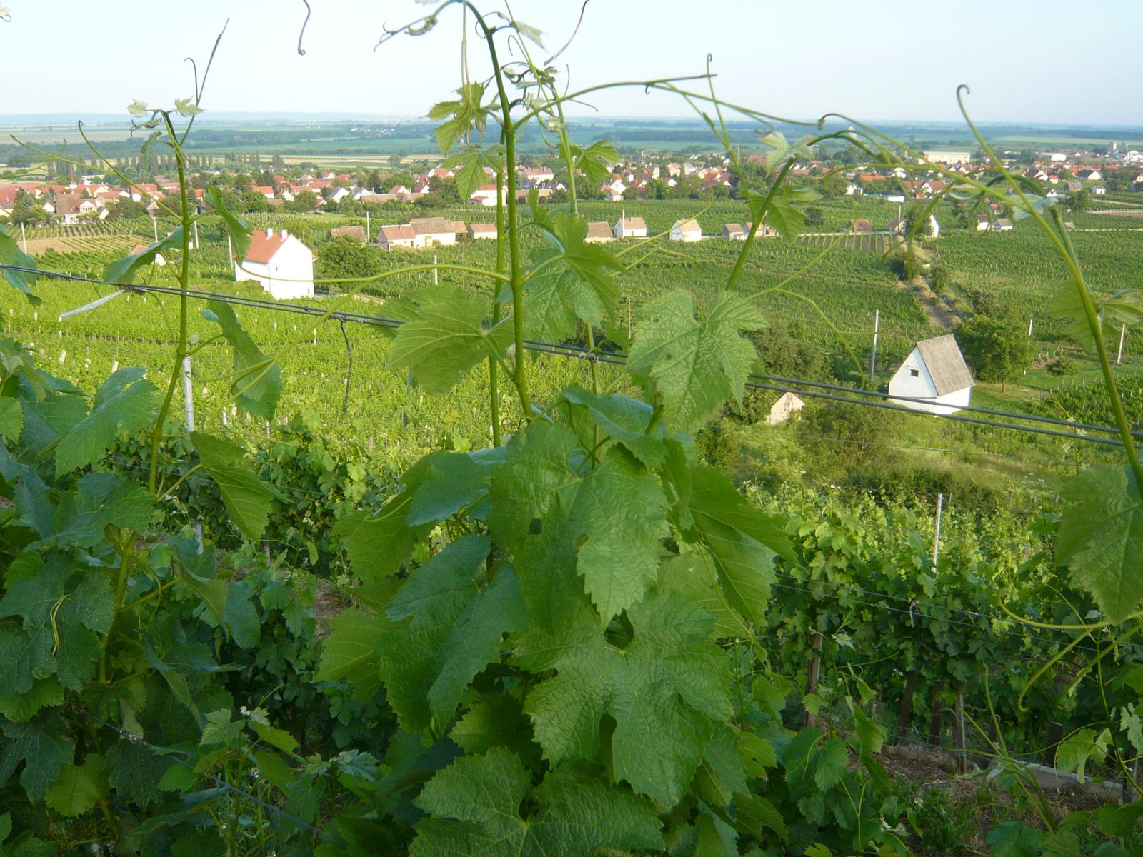 Umgebung von Villány