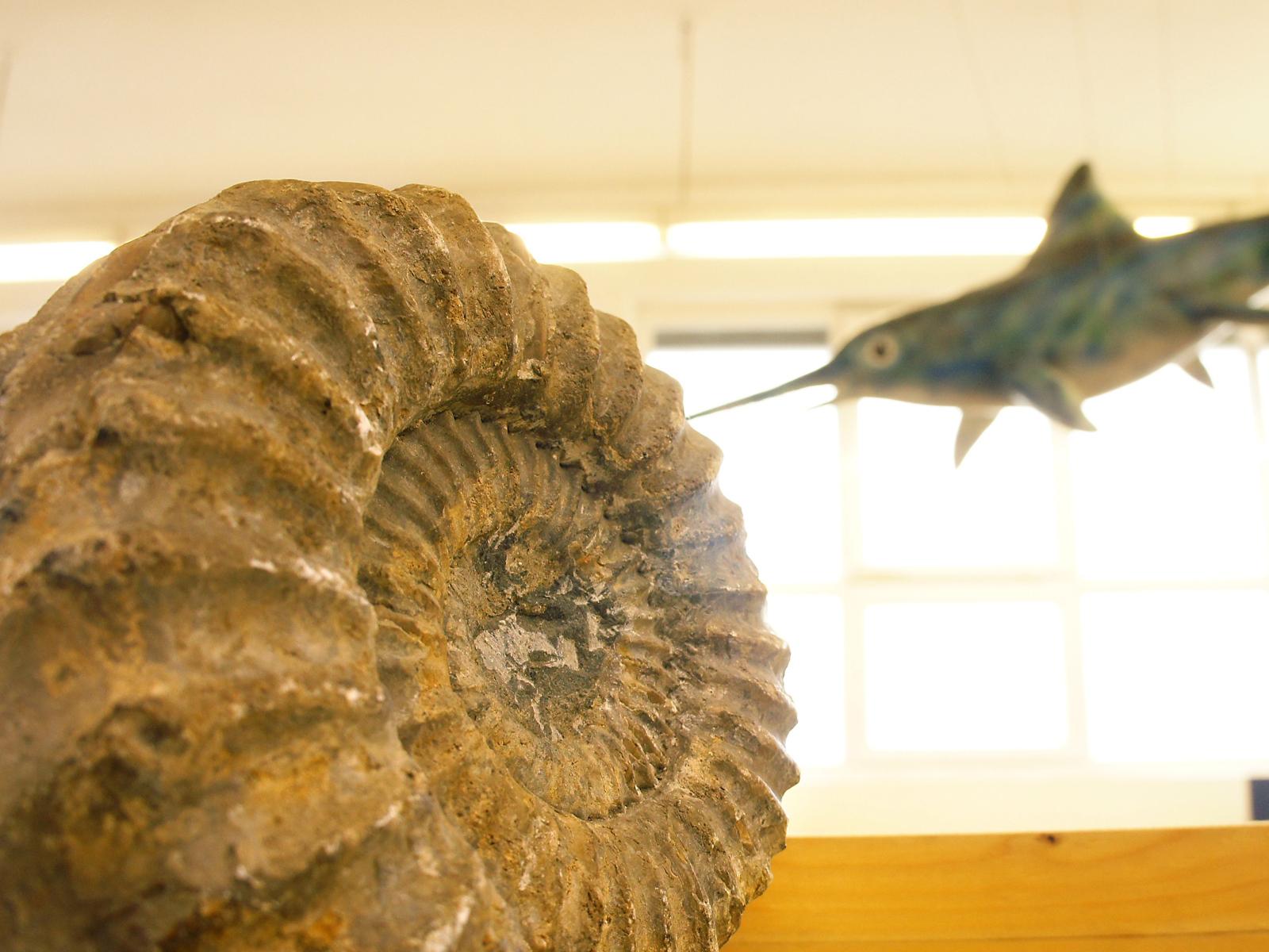 Gut erhaltene Fundstücke werden in einer Dauerausstellung in der Stadthalle präsentiert