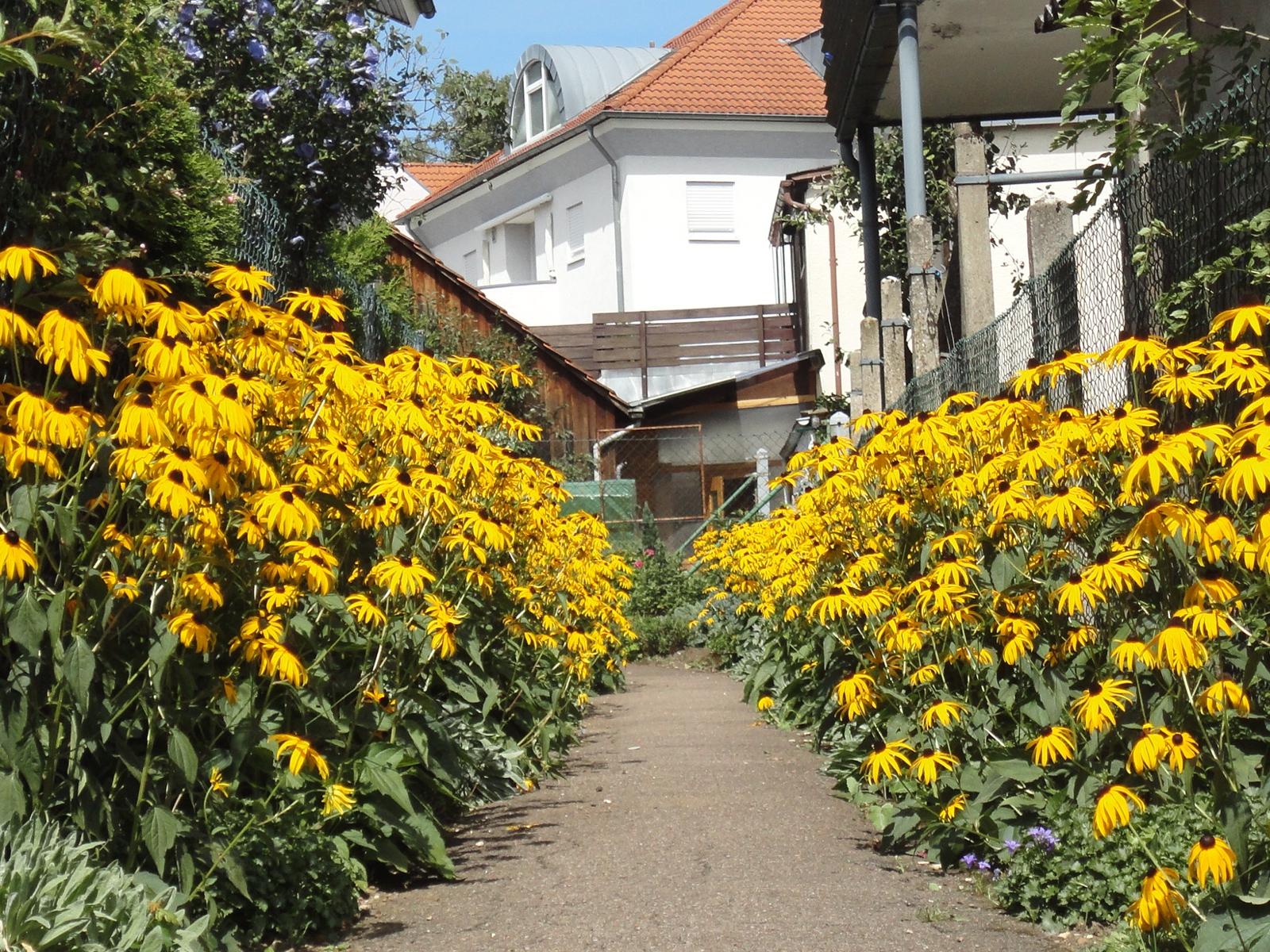 Blütenpracht in Eislinger Gärten