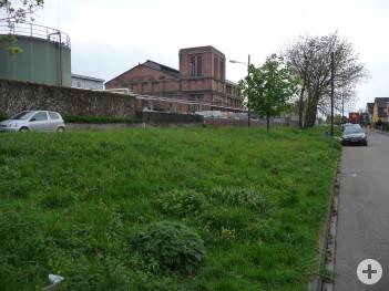 Die artenarme Verkehrsgrünfläche an der Schlos-Straße vor der Umwandlung in eine blütenreiche Extensivfläche.