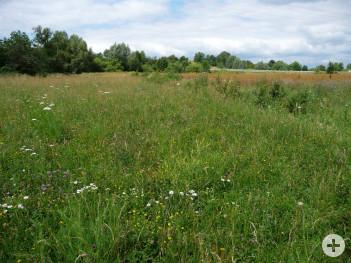 Arten- und blütenreiche Grünlandfläche mit Hecke nach der Begrünungsmaßnahme.
