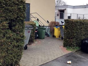 Offene Mülltonnen werden von Krähen belagert