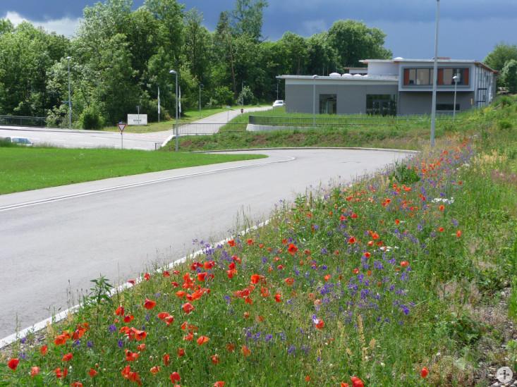 Blumenwiese als Beispiel für eine ökologische Ausgleichsfläche