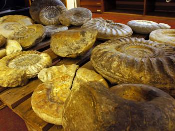 Neben den Sauriern wurden auch zahlreiche Überreste anderer Meerestiere gefunden