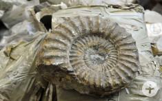 Die Funde aus dieser 181 Millionen Jahre alten Fundschicht waren teilweise sehr gut erhalten