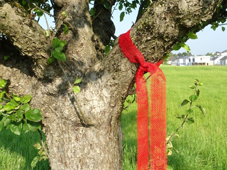 Nähere Ansicht vom roten Band am Ast eines Obstbaumes.